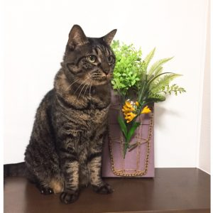 簡単に作れてインスタ映え!!ペットを飼っているご家庭にも最適?! まち針ストリングアートで作る花瓶作品集です。