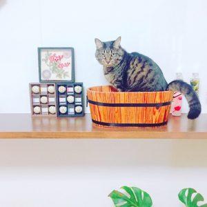 猫と一緒に癒しの空間を演出! 日常生活に彩を加え『自分だけの癒し空間』を作りましょう(*^-^*)